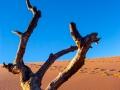 Tree on Dune Climb.