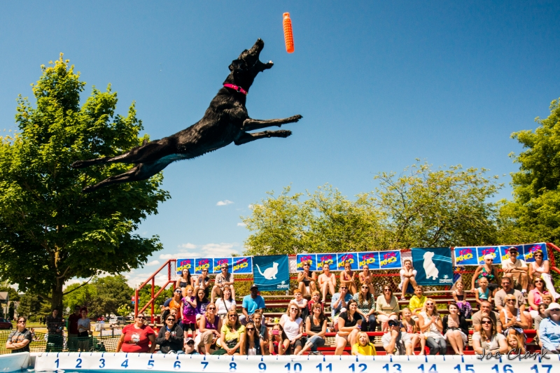 ultimate air dogs photography traverse city cherry fesitval