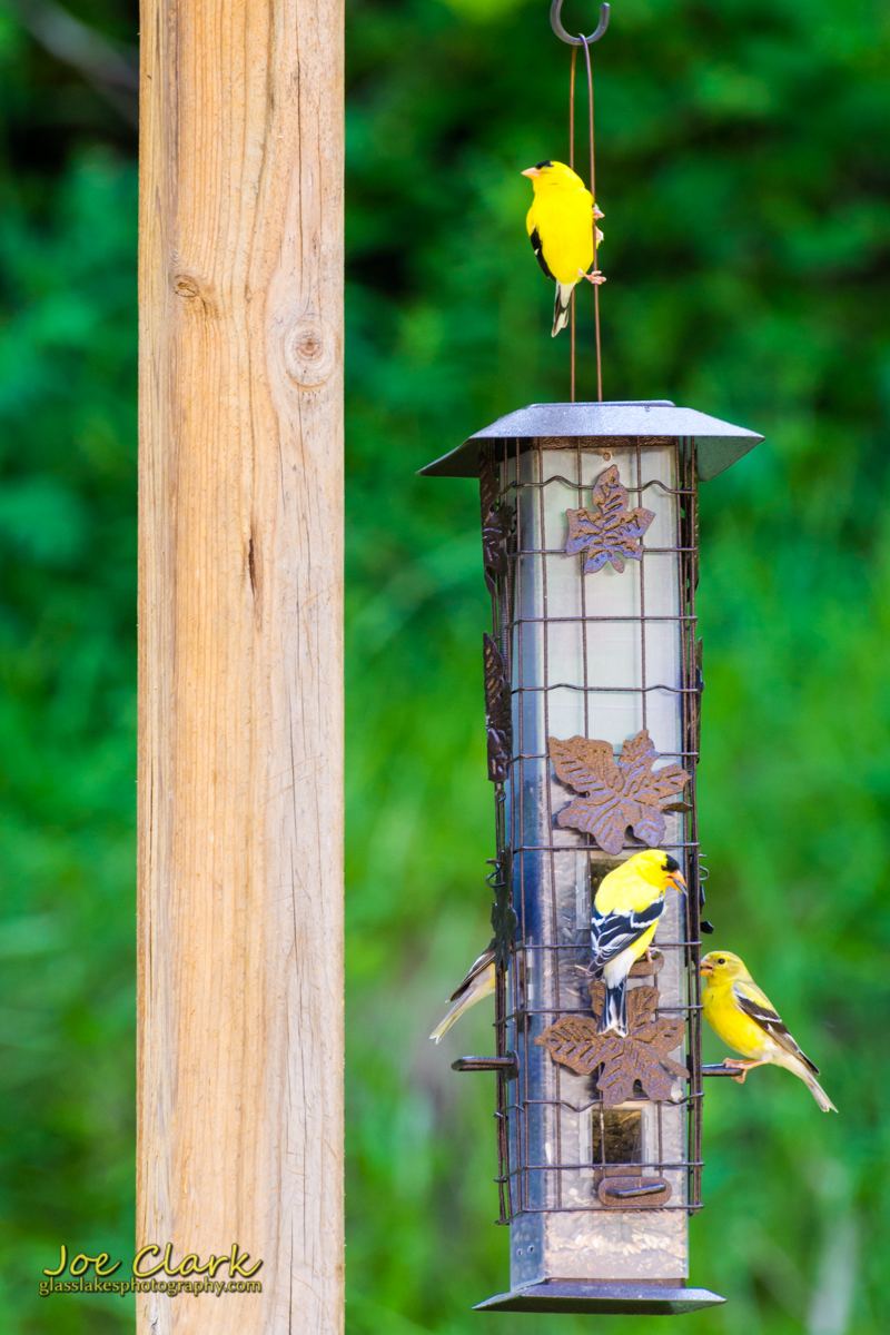 A busy day at the feeder…