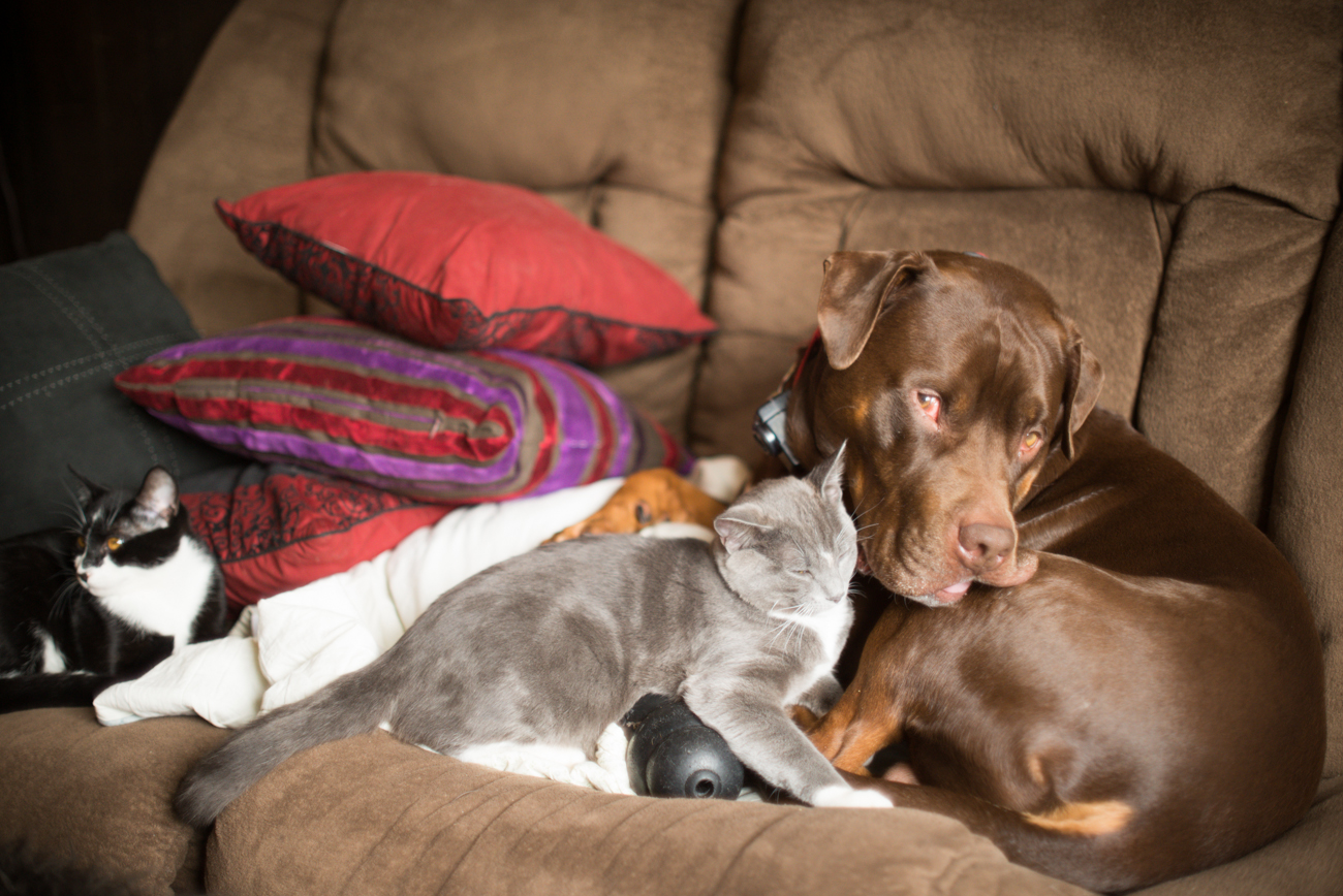 More cute cats and dog…